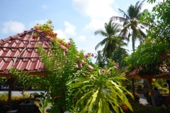 Thaïlande, île Koh Samui, végétation