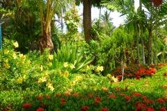 Thaïlande, île Koh Samui, jardin tropical magnifique