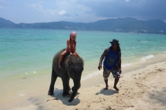 Thaïlande, Phuket, Patong, freedom beach, plage au sud avec éléphants