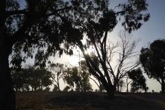 Tunisie, Djerba, arbres