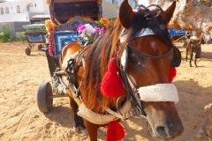 Tunisie, Djerba cheval et tour de calèche