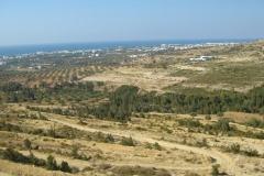 Tunisie, Hammamet Nabeul, arrière pays, oliviers
