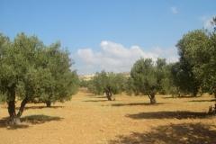 hammamet-nabeul-8983