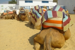 hammamet-nabeul-9013