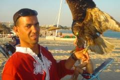 Tunisie, Hammamet Nabeul, plage et rapace