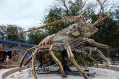 Floride, USA, Marathon Key, langouste géante