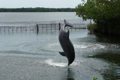 Floride, USA, les Keys, les dauphins