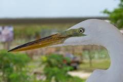 Floride, USA, Everglades, oiseau