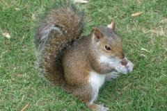 Floride, USA, Orlando, écureuil