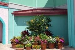 Floride, USA, Orlando, parc Disney pots de fleurs