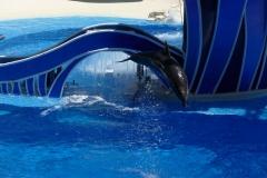 Floride, USA, Orlando, Seaworld, le dauphin saute et plonge