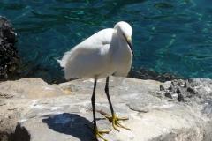 Floride, USA, Orlando, Seaworld, aigrette blanche