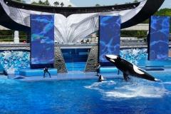 Floride, USA, Orlando, Seaworld, les orques plongent