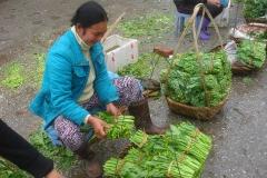 Vietnam, vendeuses de légumes et d'herbes aromatiques