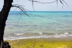 Zanzibar - Prison island -plage