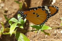 Zanzibar - Jozani ferme aux papillons