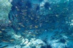 Zanzibar - Jambiani - lagon plongée