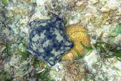 Zanzibar - Jambiani - lagon - corail