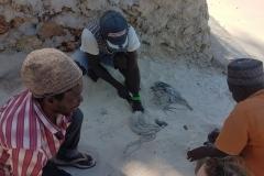 Zanzibar - pêcheurs de poulpes