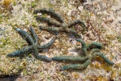 Zanzibar - Jambiani - lagon étoile de mer