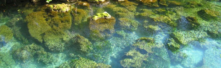 Xel Ha, éco parc de la Riviera Maya, Mexique