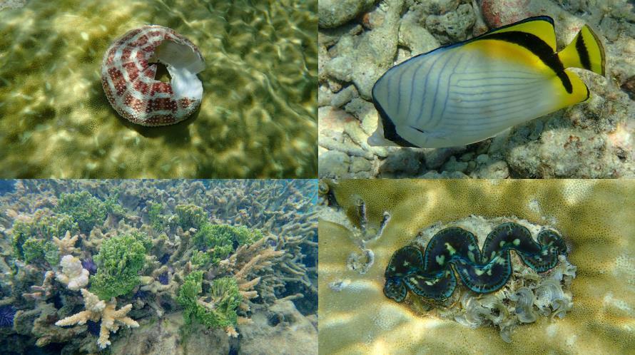 Poissons et coraux du lagon Flic en Flac Maurice