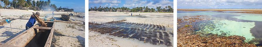 Activités à marée basse à Jambiani Zanzibar