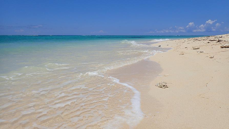 Corail sur la plage du Morne Brabant Maurice
