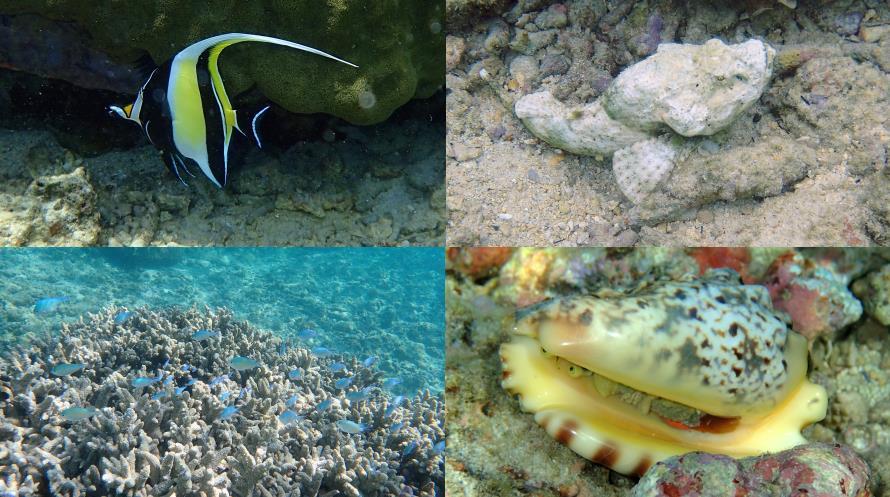 Poissons et corail du lagon Flic en Flac Maurice