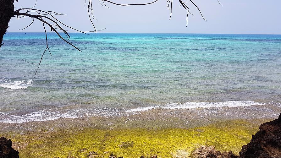 Zanzibar Prison island mer turquoise et algues vertes