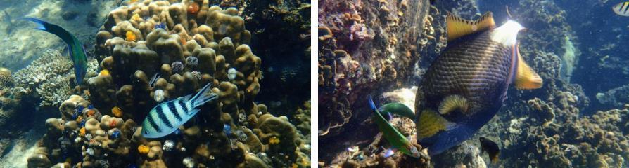 Poissons, snorkeling à Koh Tao et Koh Nang Yuan, Thaïlande