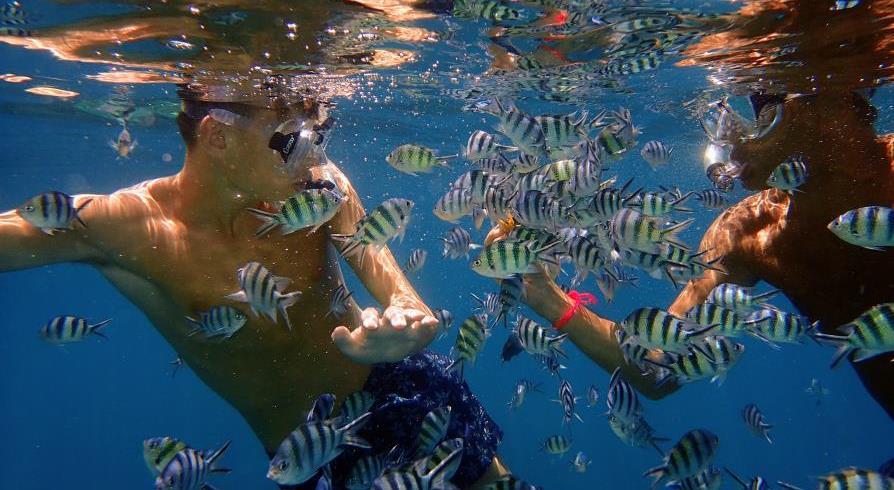 Snorkeling à Koh Tao et Koh Nang Yuan, Thaïlande, Laurent VANDJOUR avec Timothé VANDJOUR