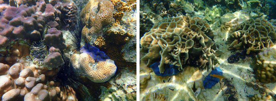 Coraux de Koh Tao et Koh Nang Yuan, Thaïlande