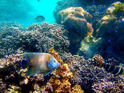 Cerf island - Barrière de corail