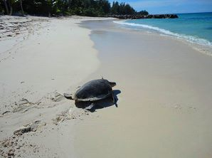 Praslin - Tortues marines